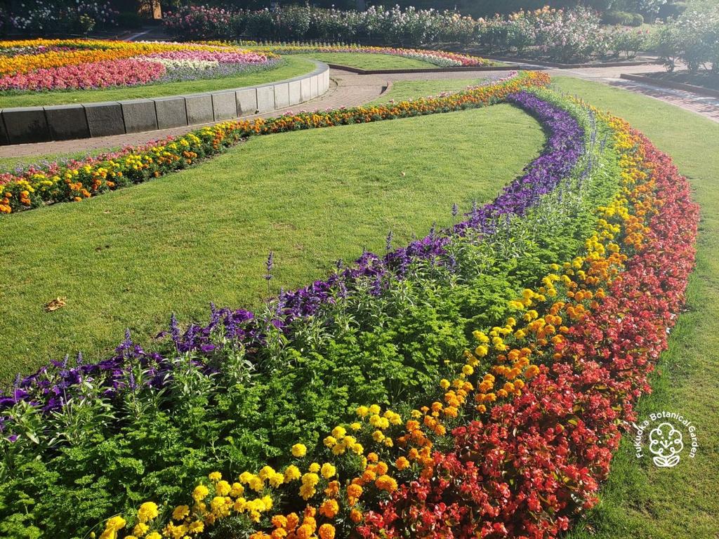線上綻放的福岡彩虹花壇,歡慶國際不再恐同日