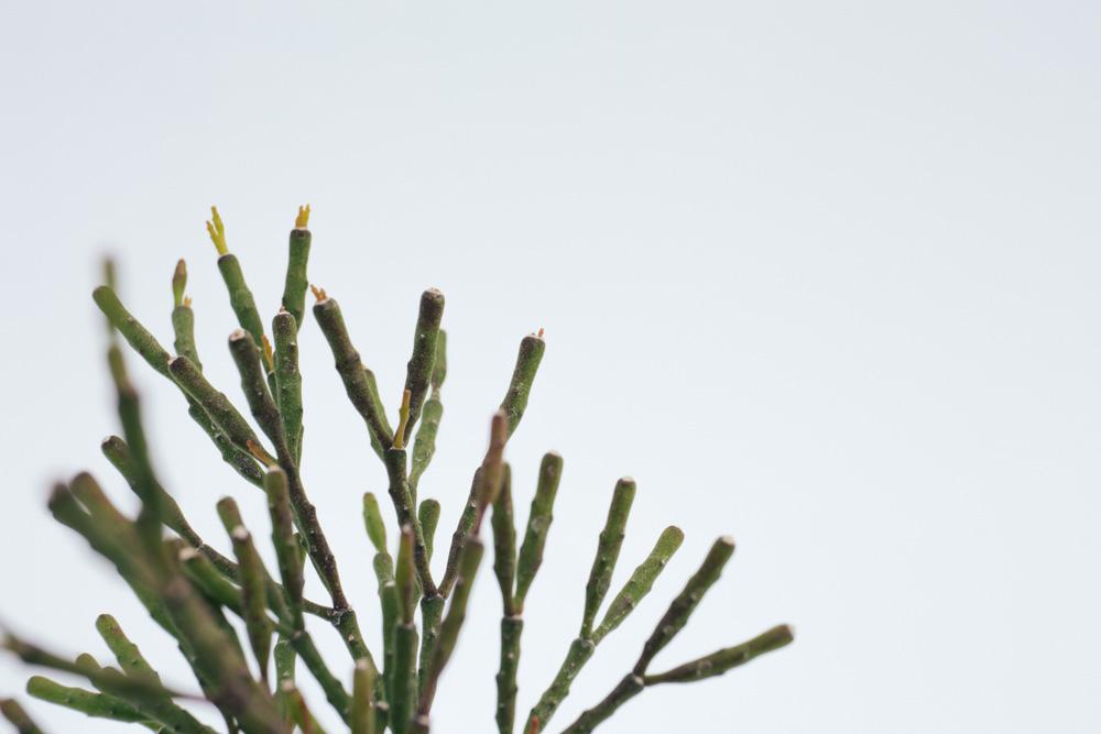 美栽,植物療癒養成計劃—多肉植物小星球
