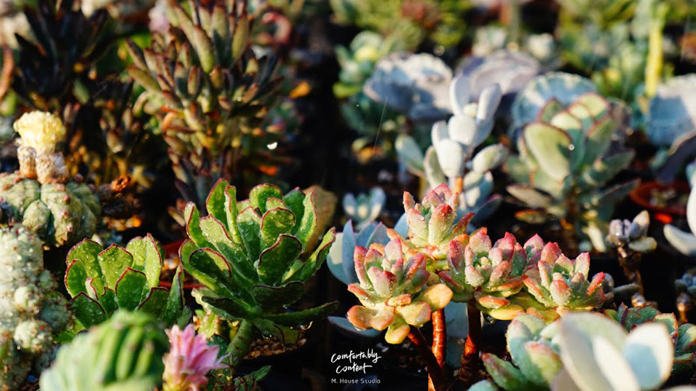 美栽,植物療癒養成計劃—小山舍